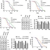 HSB-1/HSF-1 pathway modulates histone H4 in mitochondria to control mtDNA transcription and longevity