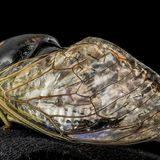 Cicada-inspired waterproof surfaces closer to reality, researchers report