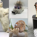 Taxidermist makes 'Animalgamations' from bodies of different animals