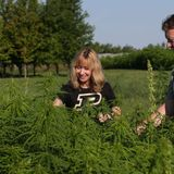 Indiana State Hemp Plan approved - WISH-TV | Indianapolis News | Indiana Weather | Indiana Traffic