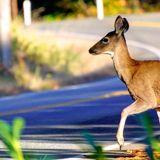 2 severed deer heads found in Lake Oswego