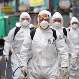 WHO probes reports of recovered Covid-19 patients being reinfected