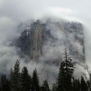 Wildlife is reclaiming Yosemite National Park: 'The bear population has quadrupled'