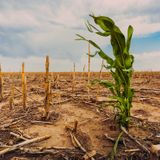 Global crop yields projected to drop as temperatures rise, new study finds - Alliance for Science