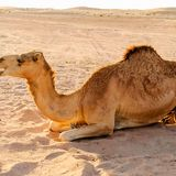 Gel layer inspired by camel fur could keep food and medicines cool