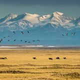 Trump administration rushes to auction off rights to oil drilling in Arctic National Wildlife Refuge - The Boston Globe