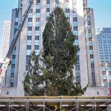 Rockefeller Christmas tree, from CNY, gets mocked and compared to Charlie Brown