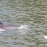 We have to save this baby dolphin in Galveston, y'all
