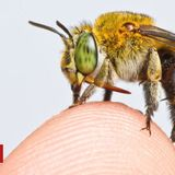 Global map of bees created in conservation first