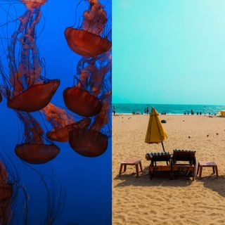 Indians Flocking to Goan Beaches Are Getting Stung by Swarms of Jellyfish