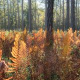 1,500 acres of historic land added to the Francis Marion National Forest
