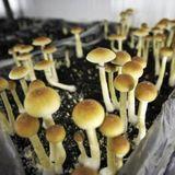 How to get on the 'magic' mushroom advisory board