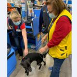 A dog was missing for weeks. Then it wandered into Walmart and found its owner working at the register.