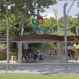 Four lions test coronavirus-positive in Barcelona Zoo, third worldwide instance since Bronx