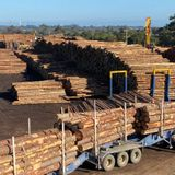 More Australian timber exports to China blocked as pressure grows to take trade dispute to World Trade Organization - ABC News