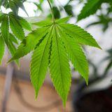Missouri Activists Officially End 2020 Marijuana Legalization Campaign Due To Coronavirus