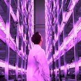 This vertical farm in Denmark will grow 1,000 tons of local greens a year