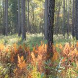 Almost 1,500 acres added to Francis Marion forest in conservation deal