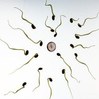 The Age of Sperm Can Have a Huge Impact on Reproduction, Say Scientists
