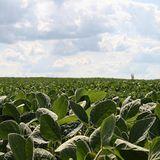 Coronavirus Is Having Mixed Effects On Missouri's Farm Economy