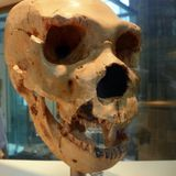 Early Humans May Have Hibernated Through Long Winters, Study Hints