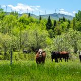 Vermont farms dump 60,000 gallons of milk since beginning of April