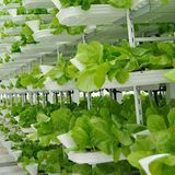 German firm says indoor vertical farm in Singapore will produce 1.5 tons of 'leafy greens' every day
