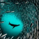 Inside the ambitious push to protect a third of the world's ocean