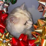 "How a Deranged ""Cat Wreath"" Brought Our Neighborhood Facebook Page Together for the Holidays"