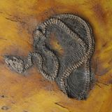 Oldest-Ever Python Fossil Found in Europe