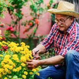 Nature-based therapy can boost immune system function among older adults, study finds