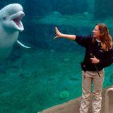 U.S. aquarium agrees to delay acquisition of Marineland belugas amid lawsuit