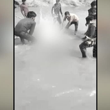 Video | Gangetic Dolphin Beaten To Death In UP, 3 Arrested As Video Goes Viral