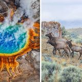 Yellowstone volcano: Why are THOUSANDS of animals leaving the active supervolcano?