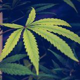 Marijuana Legalization Measure Officially Qualifies For South Dakota 2020 Ballot