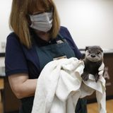 More injured, orphaned animals are finding help thanks to quarantined Houstonians