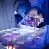 Promising new antibodies against SARS-CoV-2 found