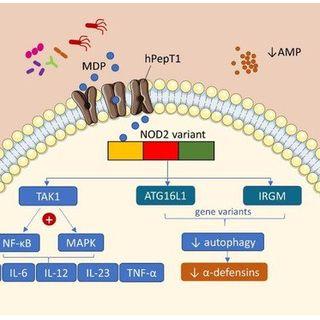 Vitamin D Modulates Intestinal Microbiota in Inflammatory Bowel Diseases