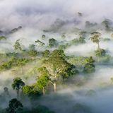 Tropical rainforests may begin pumping out carbon dioxide by 2050