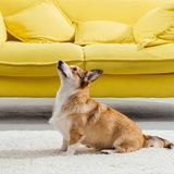 Artificial intelligence could train your dog how to sit