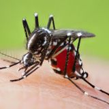 Japanese team develops cancer detector using mosquito's sense of smell