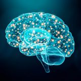 Brain imaging study reveals blunted empathic response to others' pain when following orders