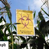 Millennials 'have no qualms about GM crops' unlike older generation