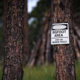 Nobody Wants Oklahoma's Proposed Bigfoot Hunting Season