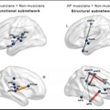 Musicians have more connected brains than non-musicians