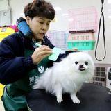 China passes new animal quarantine law