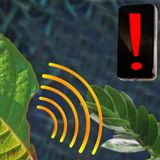 Nanosensor can alert a smartphone when plants are stressed