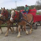 Columbia's Mule Day 2021 cancelled due to COVID-19 concerns