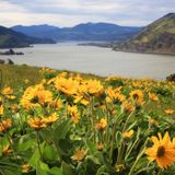 20 photos of Oregon wildflowers, as our favorite trails are closed this spring