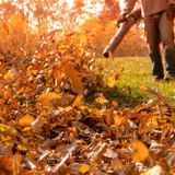 Thousands in Montgomery Co. sign petition for ban on gas-powered leaf blowers | WTOP